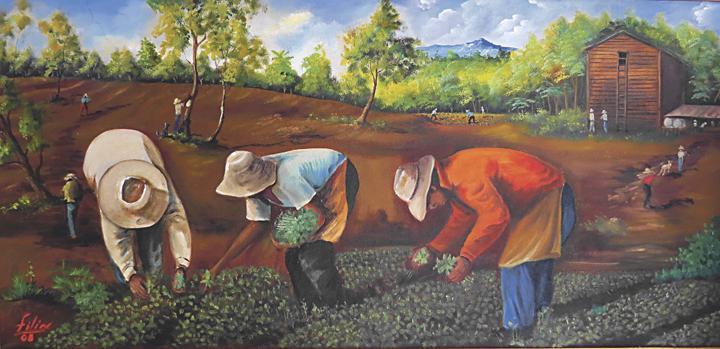 La labor de la siembra del tabaco cobra vida en sus manos