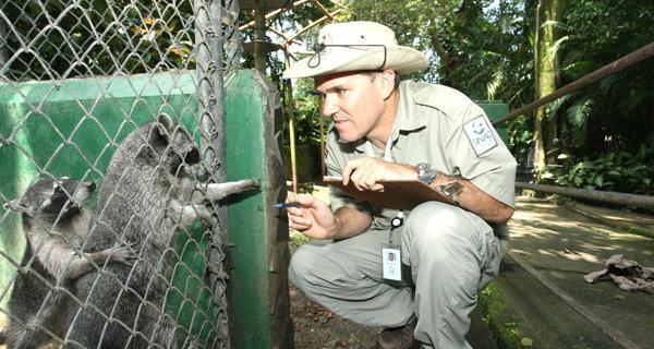 Los mapaches fueron observados por expertos del SINAC que anduvieron por todo el parque Simón Bolivar