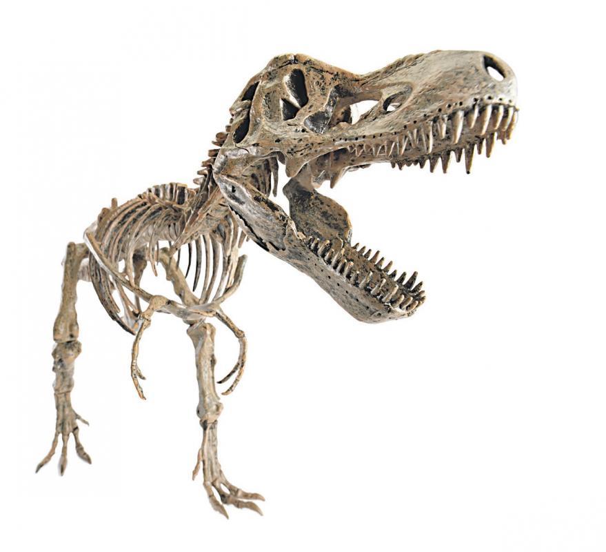 Diario Extra Utilizan Impresoras 3d Para Reproducir Huesos De Dinosaurios Incluso si el dinosaurio se hubiese mantenido congelado, el carbono, el hidrógeno, etc. diario extra utilizan impresoras 3d