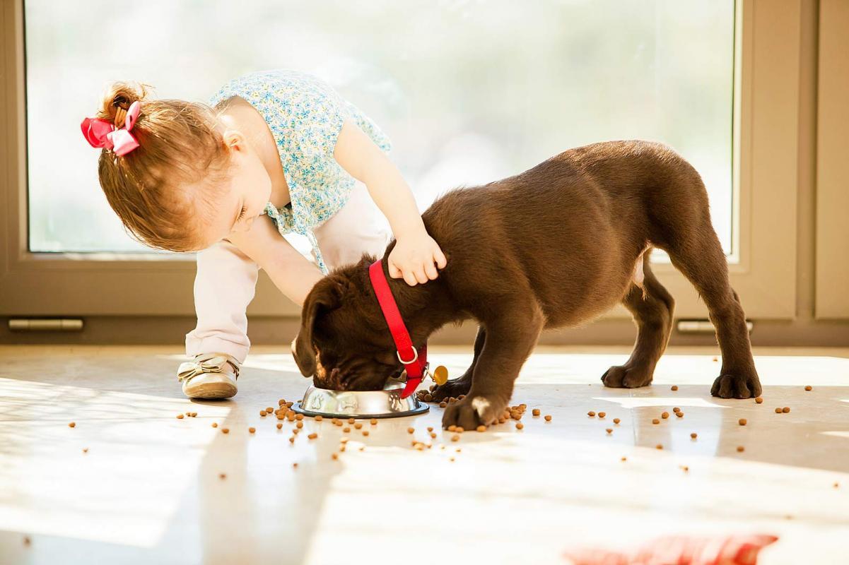 Diario extra cuidado con la cantidad de mascotas en su casa - La casa de la mascota ...