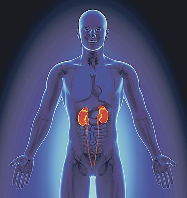 Los dolores en el vientre los riñones y los pies