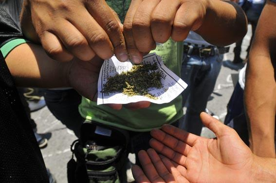 Capturan hombre con 80 plantas de marihuana