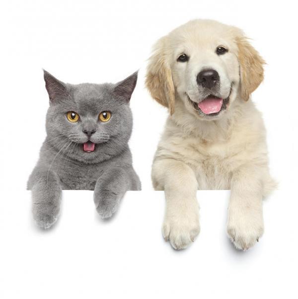 fotos de gatos asustados que dan risa bajar im genes hot hairstyles