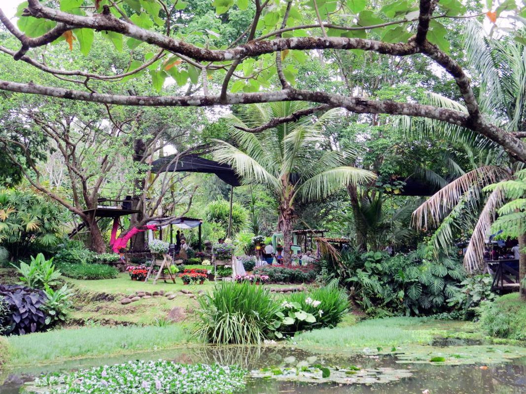Diario extra comparta en familia y con mascotas for Actividad de perros en el jardin botanico de caguas
