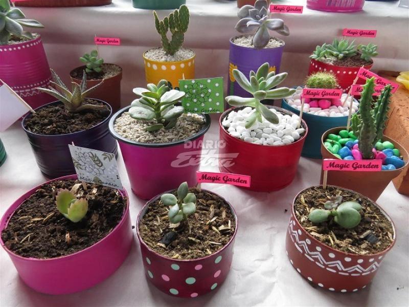 Diario extra conozca c mo cuidar las suculentas y los cactus - Informacion sobre los cactus ...