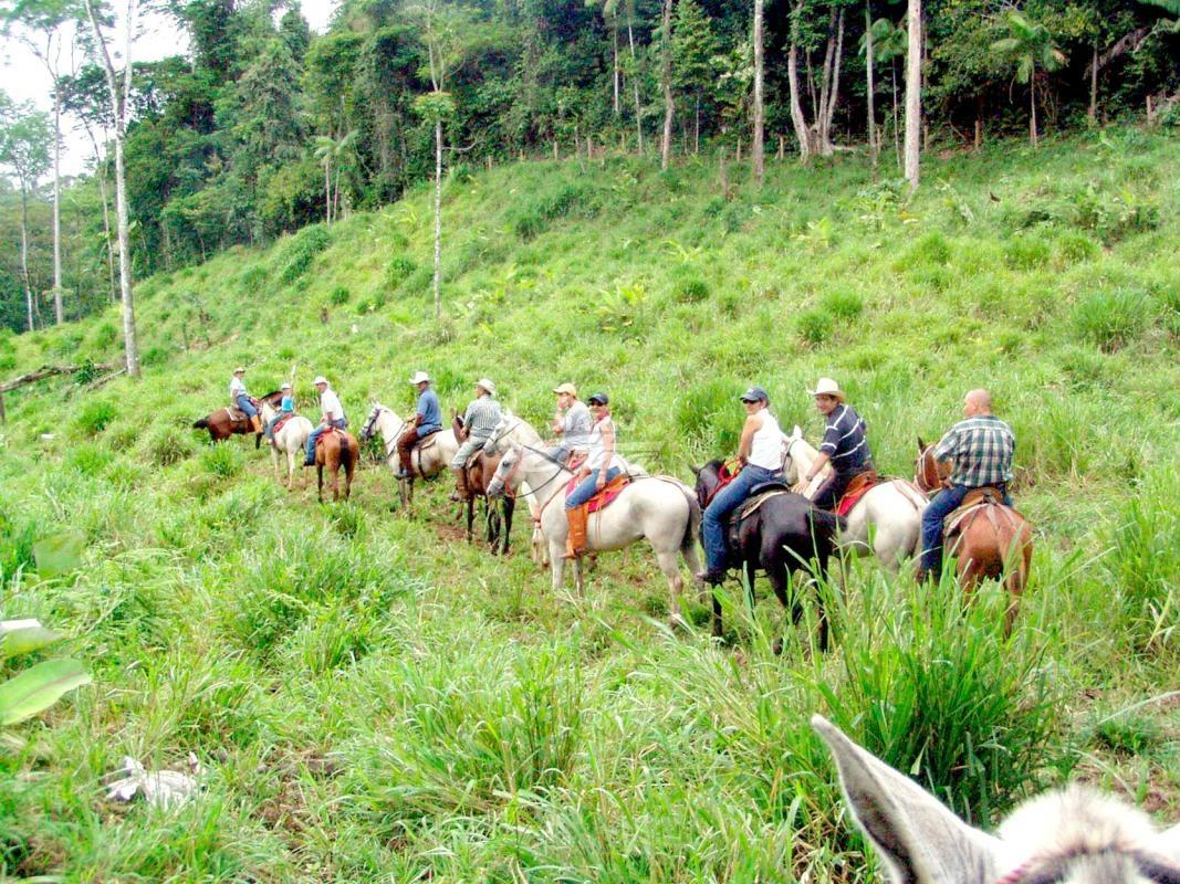 Diario Extra - Caballo mata jinete mientras cabalgaba