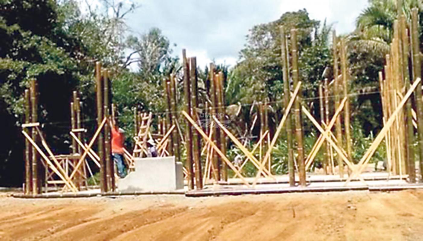 Diario extra capacitar n productores en transformaci n del bamb - Cultivo del bambu ...