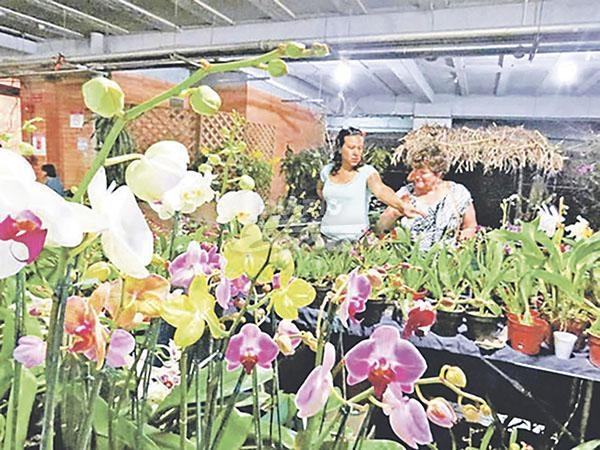 orquideas costa rica venta