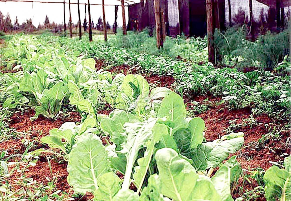 Diario Extra Proponen Impuesto De 1 A Agricultura Orgánica