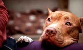 De cómo se críe el perro depende su comportamiento