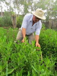 Todos los días visita la finca donde cultiva unas 700 matas y las cuida para que las plagas no las afecten
