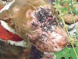 SENASA renueva convenio con órganos internacionales para velar por el bienestar animal en nuestro país