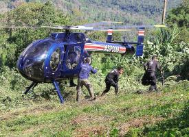 La Fuerza Pública, la PCD y Vigilancia Aérea erradicaron más de 286 mil plantas de marihuana