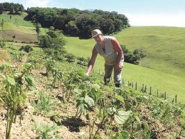 Los comerciantes prefieren el grano importado porque los costos de producción en Costa Rica son más altos
