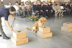 Una treintena de canes con sus amos estarán capacitándose con la idea de fortalecer los diferentes cuerpos policiales del país