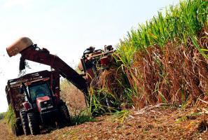 El pleito por la importación de azúcar brasileña encendió la mecha en Laica