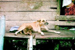 La perra también le dada de mamar a sus cachorros