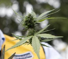 La marihuana legal se abre paso en EEUU, donde tendrá su primer