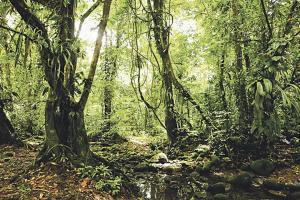 Los bosques de Costa Rica tienen casi 3.000 millones de toneladas de CO2 almacenados