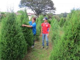 Los ticos tienen la oportunidad de visitar una hermosa zona y además llevarse un árbol de gran calidad.