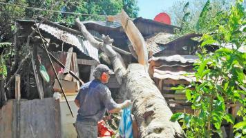 Este árbol cayó sobre el cuarto de dos menores que resultaron ilesos en Santa Cruz, Guanacaste