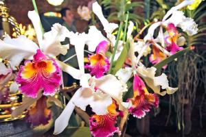 La Exposición Nacional de Orquídeas le espera este fin de semana en Cartago.