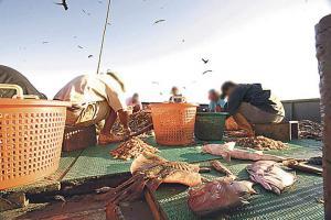 El presidente de la Cámara de Pescadores de Guanacaste, Martín Contreras, rechazó que el texto contenga medidas para hacer de la pesca de arrastre una actividad sostenible
