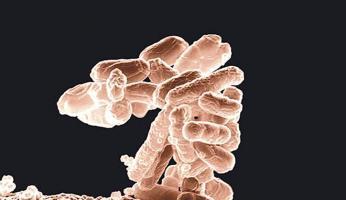 """Ante la amenaza de la """"superbacteria"""", expertos en salud se reúnen en los Estados Unidos"""